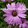 6月は転換期でした。断捨離とサラダとブログ開始から半年。6月に人気だった記事ベスト5