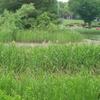 3ヶ月ぶりに昭和記念公園へ