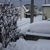秋田での雪