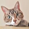 猫共生住宅を建てた理由 猫に関する問題