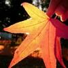 紅葉写真をスマホで撮ってみました。