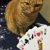 トランプ猫♥️♠️