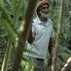 アマゾンの「ジャングル歩き」は怖い?