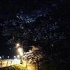 夜の桜を撮りに行く