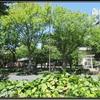 地下鉄矢場町近隣 #1 『若宮八幡社』