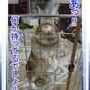 うさぎの写真 28