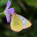 大学生の蝶撮影旅日記