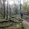 晩秋の森を歩く