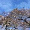 塩釜神社 桜と紅葉