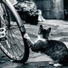 自転車屋はパンク修理を拒否できるのか?