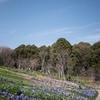 天気が良すぎた~里山ガーデン