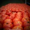 産直の野菜とか果物とか見るだけでも楽しいよ〜@KCCFM