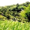 横浜・三渓園(2018年5月)2