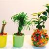 観葉植物 ジェリーボールに植え替えてみました!