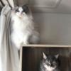 アニマルコミュニケーターyukiさんのネコさん達から感想をいただくの巻  その1