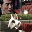 【子犬の躾】うちにきて105日目 ~ピィ子の育児日記(その15)~【おっと、成長が止まった?】