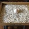 宇宙卵の儀式
