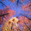 スケールの大きな紅葉:県の総合運動公園