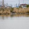 六番川遊水池(岡山県岡山)