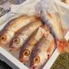 2017年12月26日 小浜漁港 お魚情報