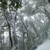 豪雪高尾山