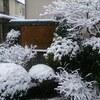 雪に振り回された1日でした