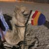 ドバイ新婚旅行 砂漠リゾートステイ  バブアルシャムス 自然&動物好きな人におすすめ!(個人手配)