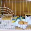 猫を飼うのにケージは必要?使うシーンは意外にある!メリットと活用法
