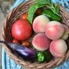 昨日の夕飯はポタジェ収穫の夏野菜も