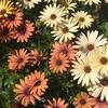 ガーデニングを始めて思うこと。何色の花が集まるかはその時の心が表れている?