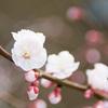 3月16日生まれの運勢・誕生花言葉への想い