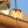 鳥のことをもっと知るのにオススメの野鳥図鑑・本。年間100回以上野鳥観察するバードウォッチャーが紹介