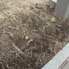 春の兆しが