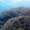 辺野古のもう一つの問題ーサンゴ礁の破壊