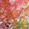 白鳥公園の紅葉の景色