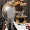 回鍋肉~晩御飯の記録~猫分補給