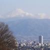 実家に帰省:梅と富士山