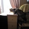 高所恐怖症の猫なのぉ??
