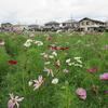 浜ちゃん日記  猛暑と家庭菜園