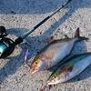 ベイトタックルで海釣りを始めるなら、お勧めのリールは?
