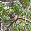 野鳥撮影に行ってきました@奈良山公園あげいん