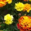 人間でも動物でも植物でも産まれてきたものは皆んな強い!と、花の種が教えてくれた件。