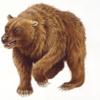 人間を襲う前に:人間に食い尽くされて、絶滅したクマ!  (BBC-Science & Environment, August 15, 2019)
