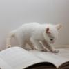 読書が好き?でも読みっぱなしじゃ意味ないぜ!本は自分の糧にするもんだ!!