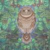 ひみつの花園の塗り絵より【森のフクロウ】夜のイメージで塗ってみた