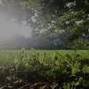 ポワポワの草とジョギングおばあちゃん 〜 日常から、ひとコマ