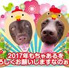 2017年よろしくお願いしますなのぉ〜!