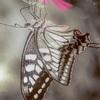 To butterflies making rapid progress