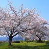 青空に桜が映える