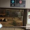 上野動物園 6回目